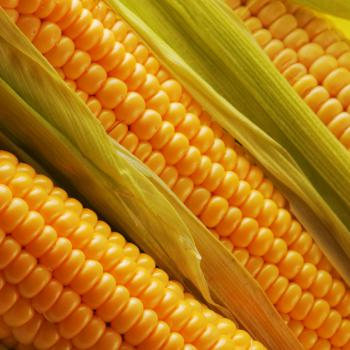 Kukuřice